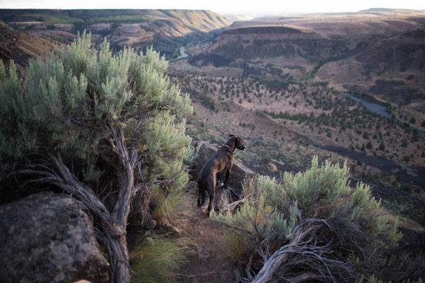 raw-wild-raw-dog-food-dog-overlooking-canyon