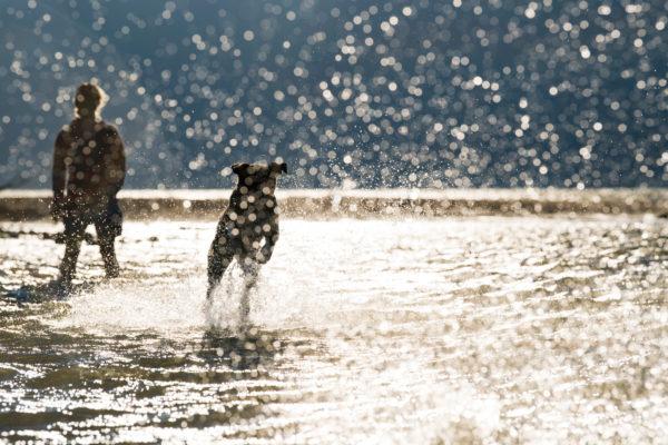 raw-wild-raw-dog-food-dog-playing-fetch-in-water